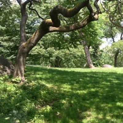Prato al Central Park, New York