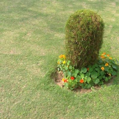Prato a New Delhi con vaso di fiori