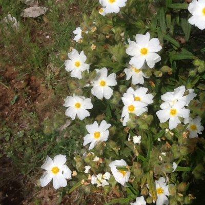 Prato con fiori in Croazia