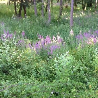 Prato istriano fiorito all'ingresso di un bosco