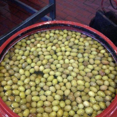 La produzione delle olive da mensa