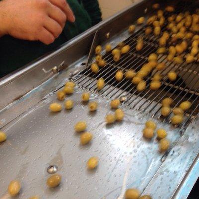 Le olive da mensa Nocellara Etnea denocciolate