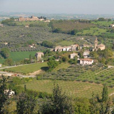 Veduta di olivi a Cartoceto