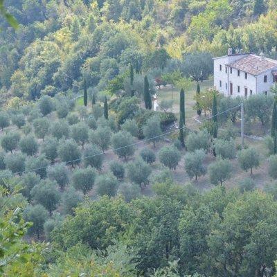 Olivi e cipressi