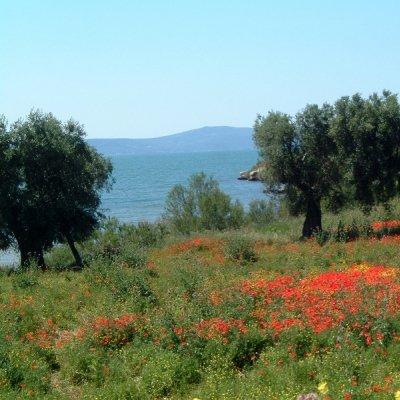 Olivi nel Gargano