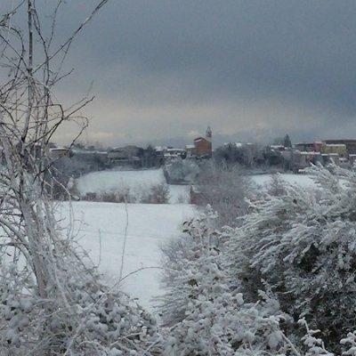 Olivo con neve a San Giorgio, in provincia di Pesaro e Urbino