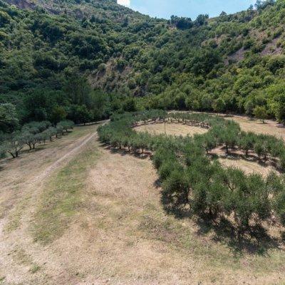 Bosco di San Francesco, Assisi PG, Panorama dalla Torre Annamaria_Foto Lucio Lazzara_2018 © FAI - Fondo Ambiente Italiano