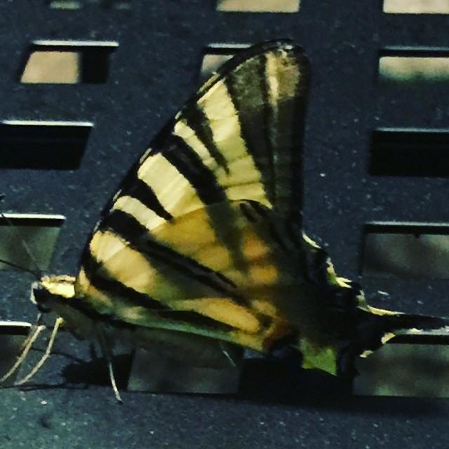 A cosa pensano le farfalle?
