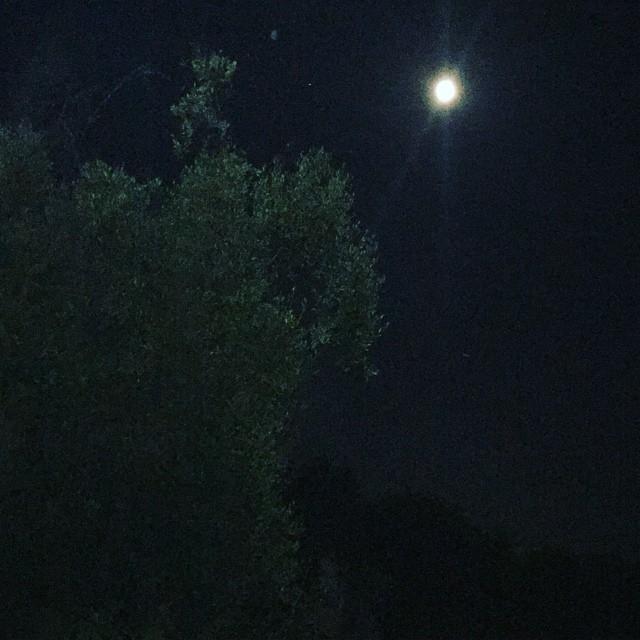 L'olivo e la luna