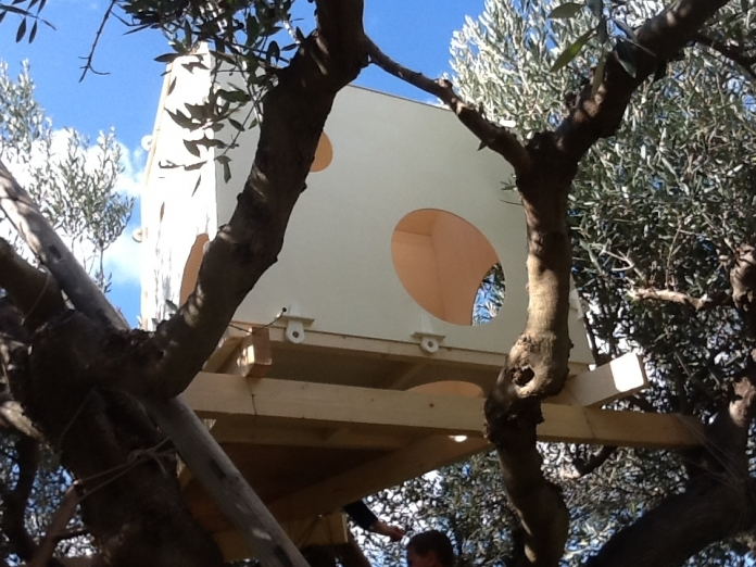 A house on an olive tree