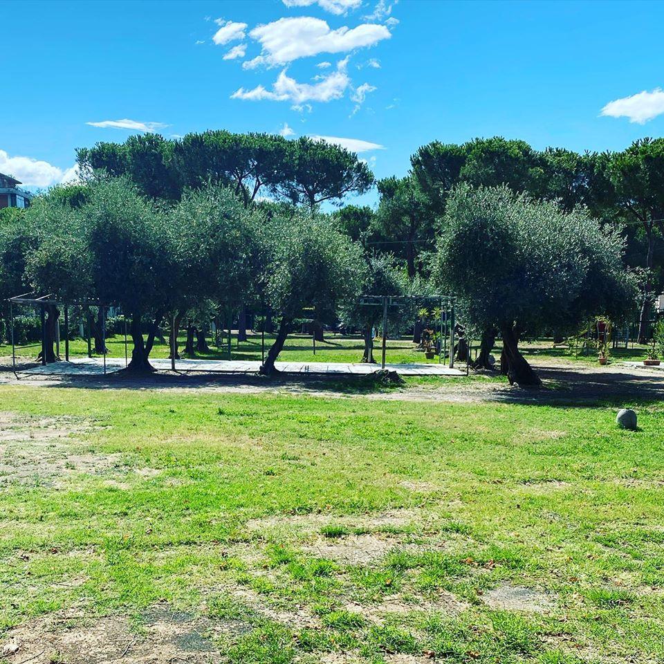 Olivi in un parco