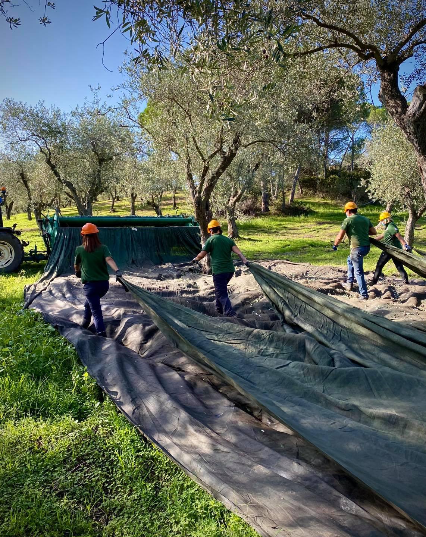 L'olivagione 2020 in Sardegna