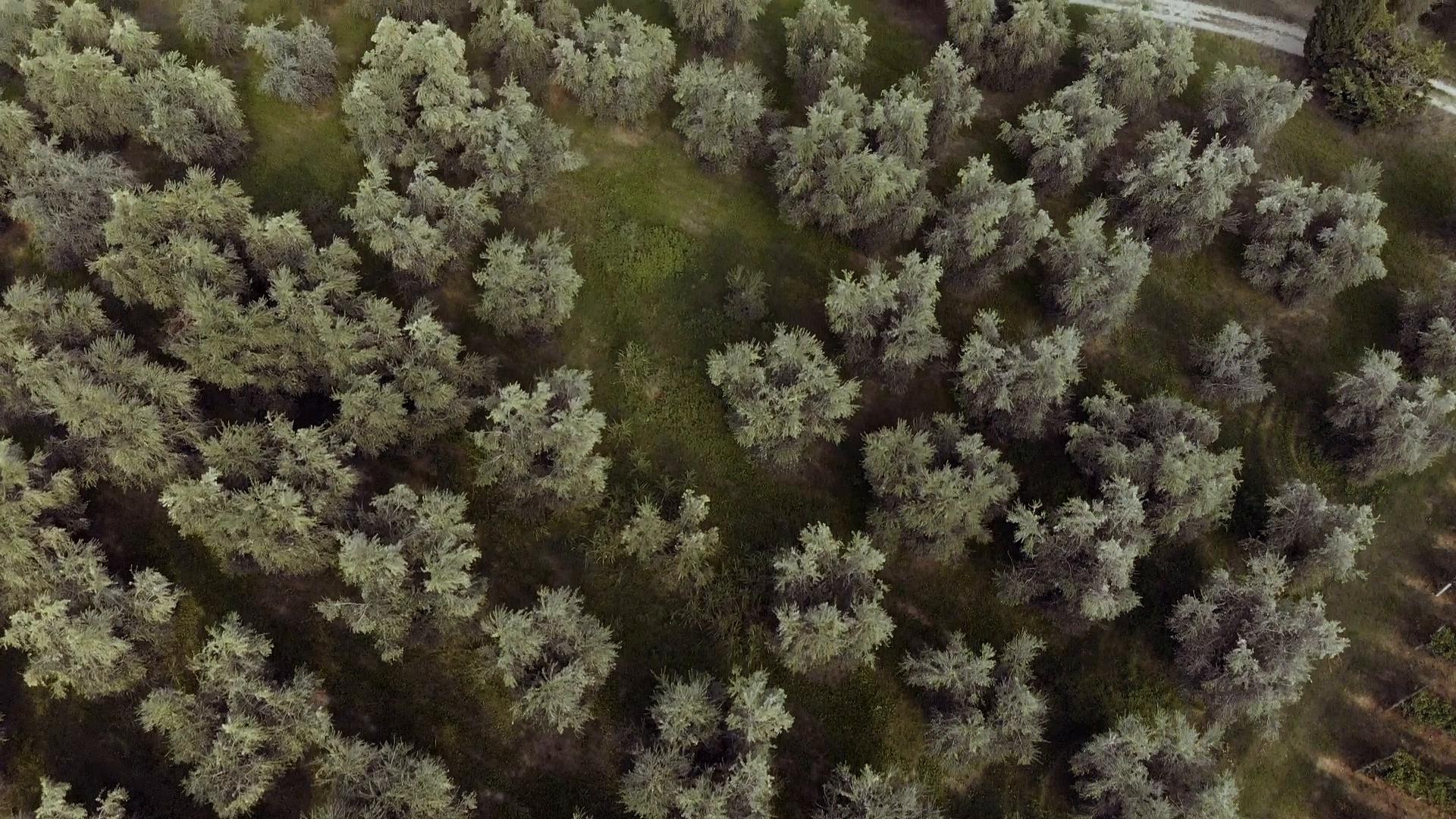 Una visione del Garda attraverso i suoi olivi