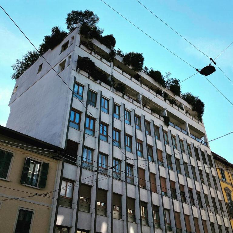 Terrazzo con olivi a Milano