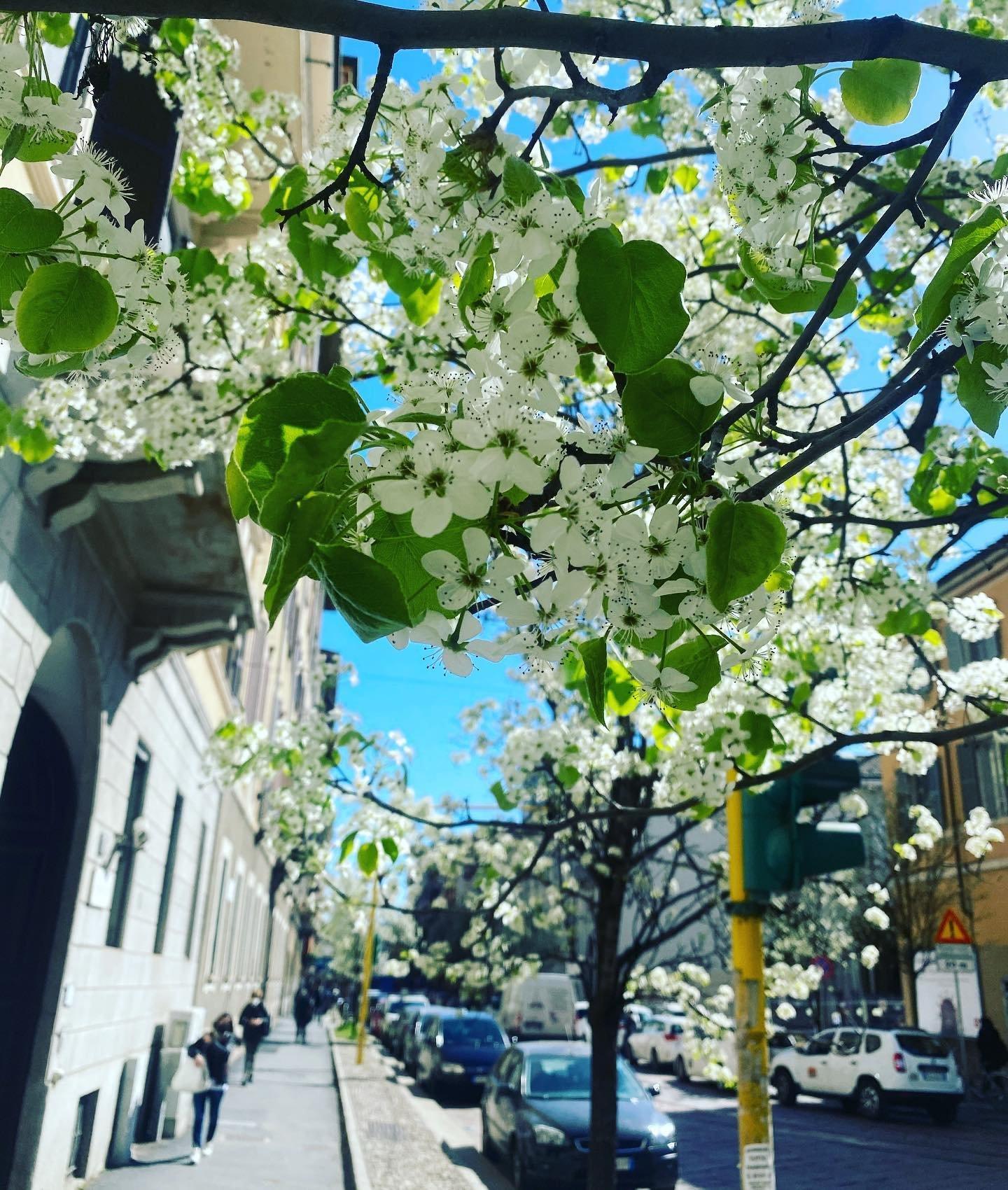 A Milano, in attesa dell'arrivo ufficiale della primavera