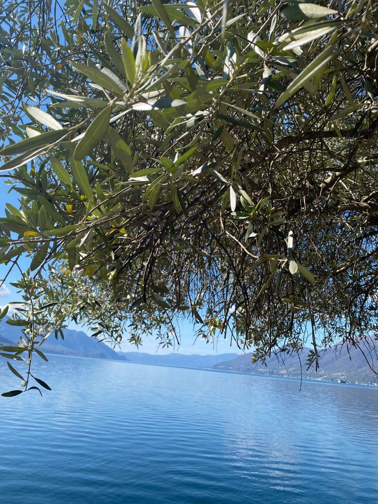 Pasqua tra gli olivi vista lago
