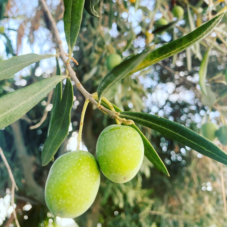 Una coppia di olive