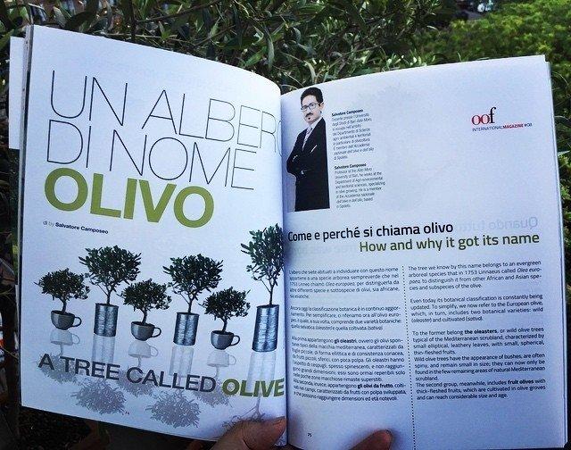 Un albero di nome olivo