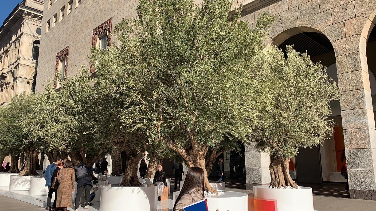 Olivi a Milano