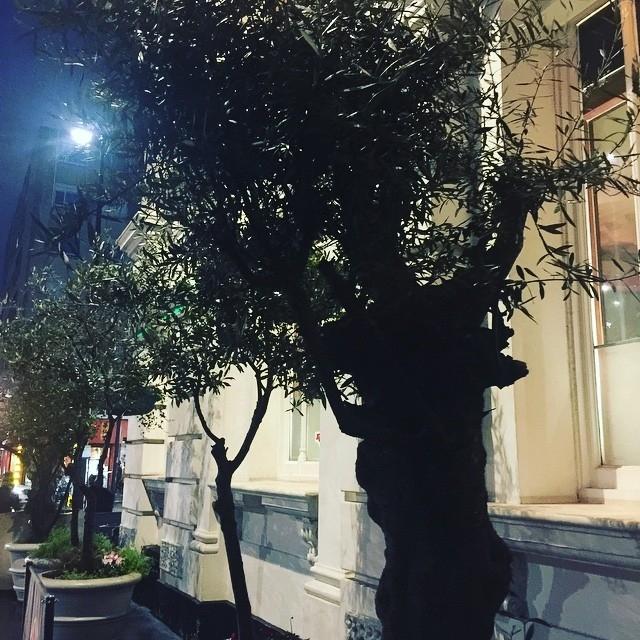 Olivi a Londra