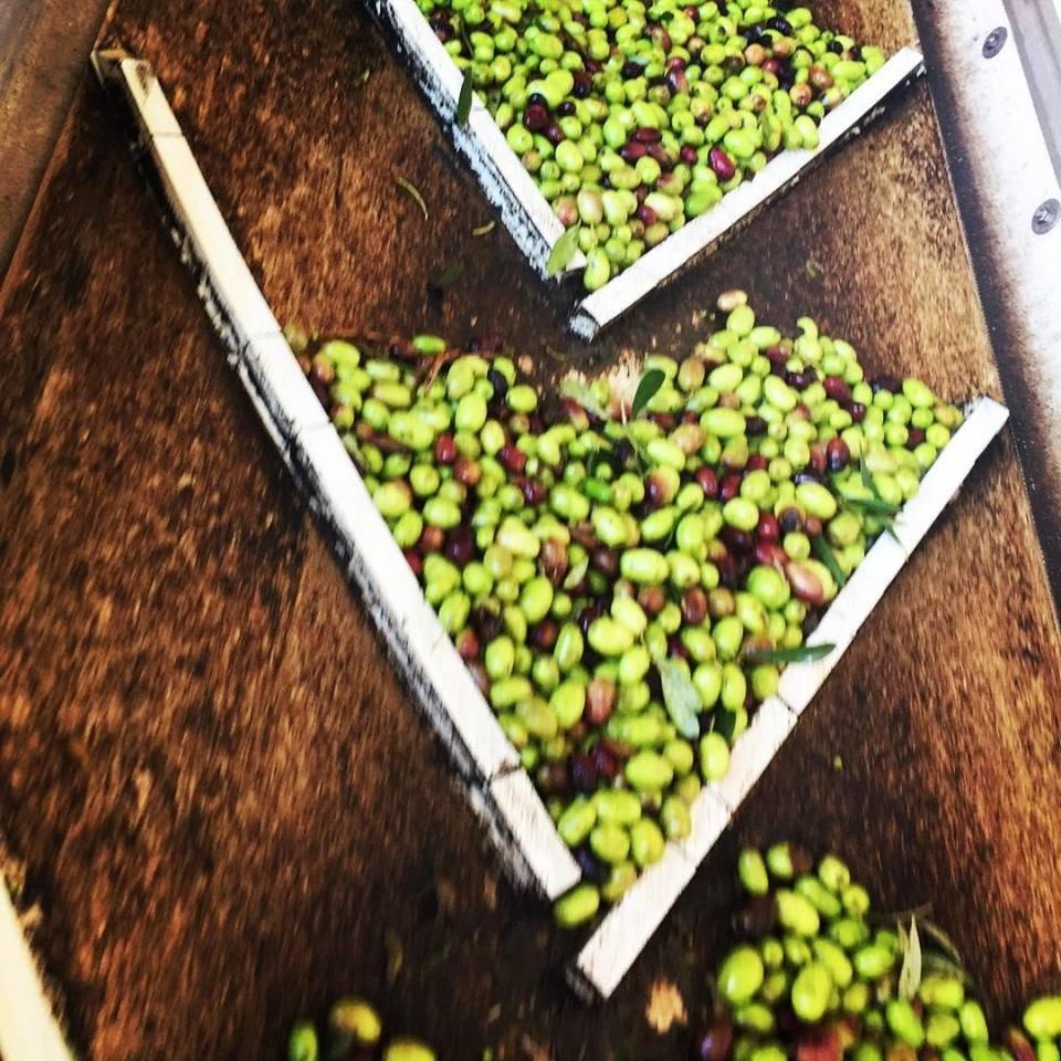 L'ultimo viaggio delle olive