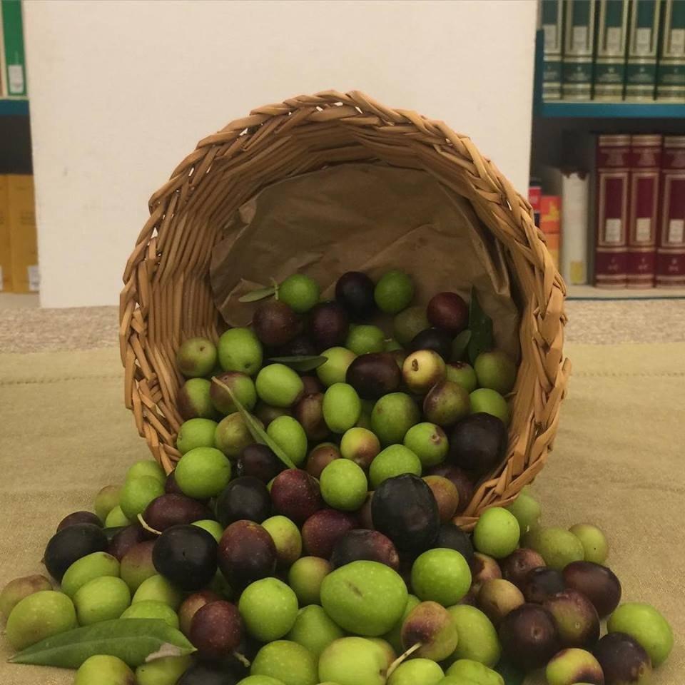 Le olive tra i libri