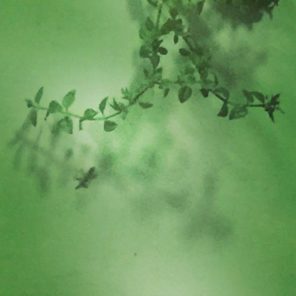 Il geco sul muro