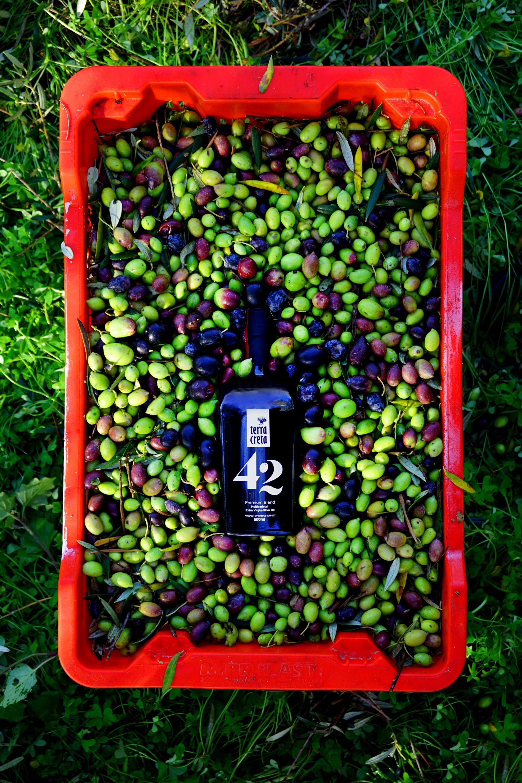 Terra Creta 42 Premium Blend