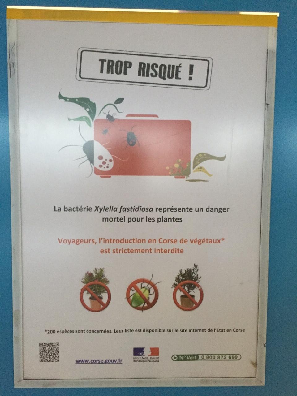 Paura Xylella in Francia