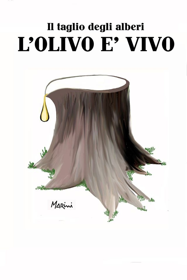 Cosa succede agli olivi?