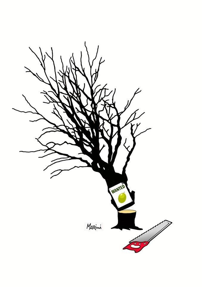 L'abbattimento degli olivi
