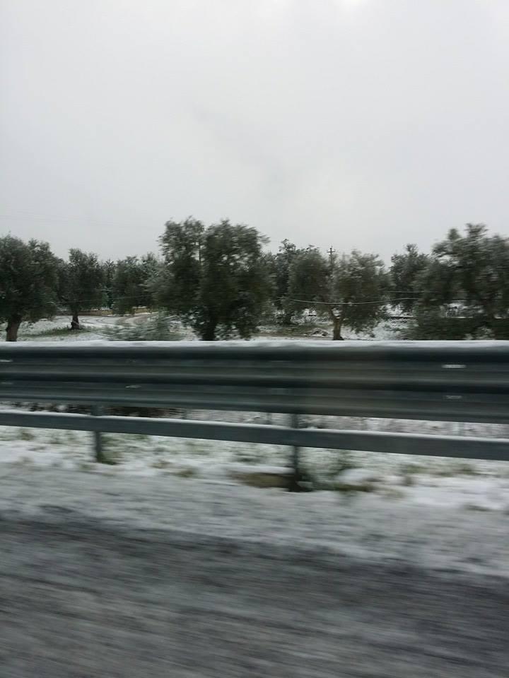 Neve tra gli olivi