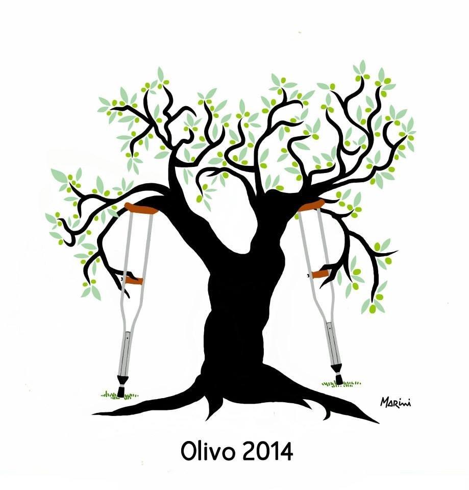 L'olivo malconcio