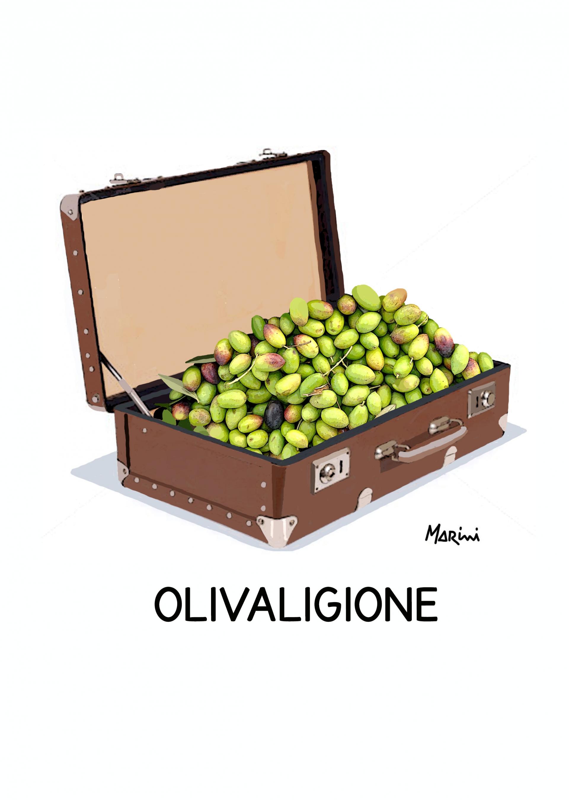Un carico di olive