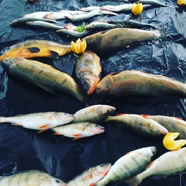 Pesce di lago. Con quale olio