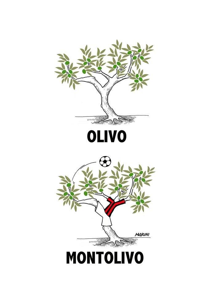 Olivi in azione