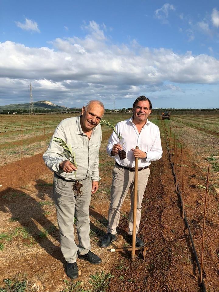 Italian olive growers