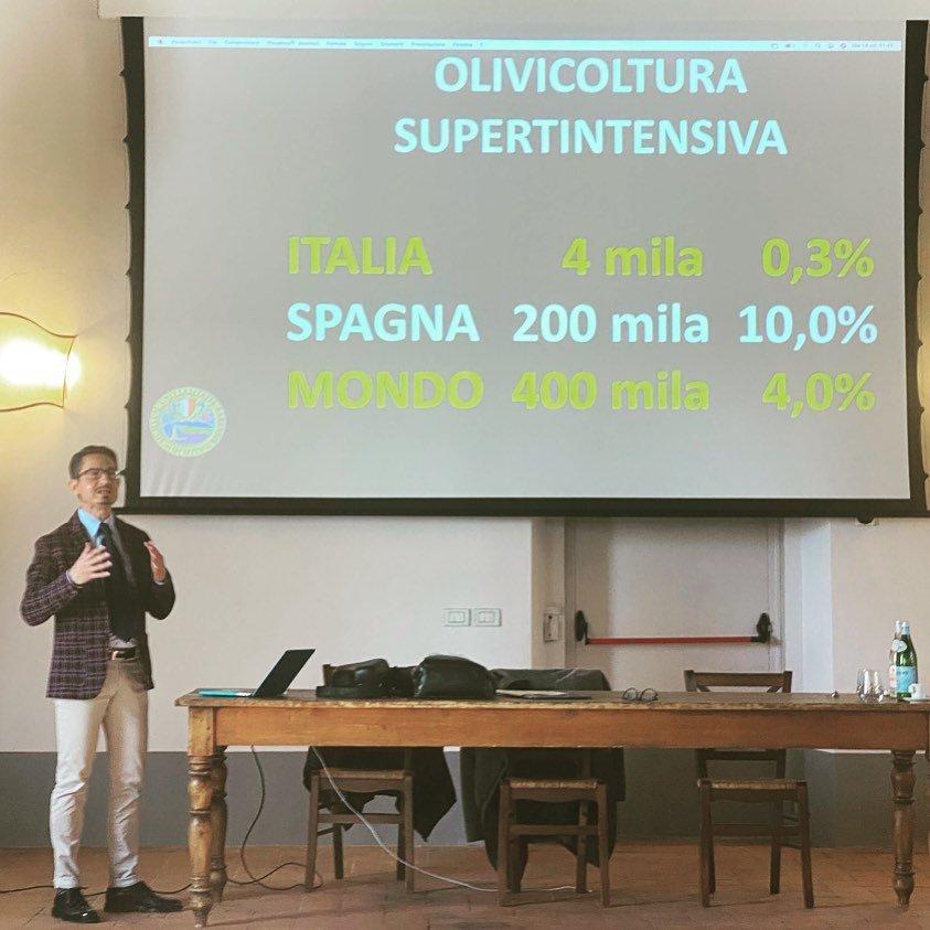 Perché l'Italia olivicola è fanalino di coda nel mondo?