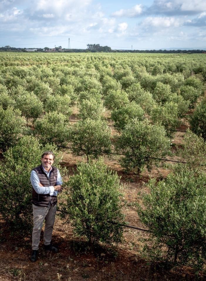 New olive trees in Sardinia, Italy